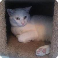 Adopt A Pet :: Blondie - Temecula, CA