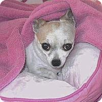 Adopt A Pet :: BREEZY: In Loving Home - Palm Coast, FL