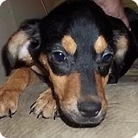 Adopt A Pet :: Tocara - Staunton, VA