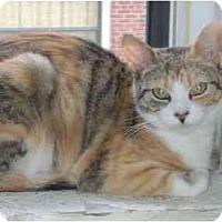 Adopt A Pet :: Ella - Etobicoke, ON