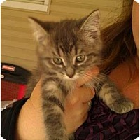 Adopt A Pet :: Willow - Troy, OH