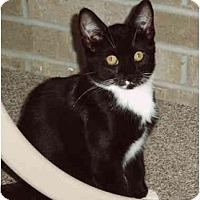 Adopt A Pet :: Lizzie - Montgomery, IL