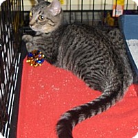 Adopt A Pet :: Tiara - Richmond, VA