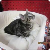 Adopt A Pet :: Tinker - Sterling Hgts, MI