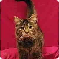 Adopt A Pet :: Reagan - Sacramento, CA