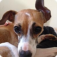 Adopt A Pet :: Penny - OC - San Diego, CA