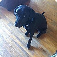 Adopt A Pet :: Pepper - Saskatoon, SK