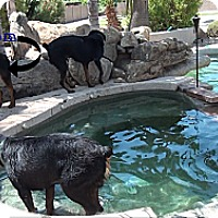 Adopt A Pet :: manson - Gilbert, AZ