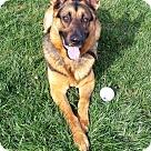 Adopt A Pet :: Kelo 4063