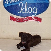 Labrador Retriever Mix Dog for adoption in Albemarle, North Carolina - Bruiser