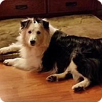 Adopt A Pet :: Kodi - Circle Pines, MN