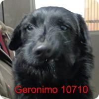 Adopt A Pet :: Geronimo - baltimore, MD