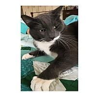 Adopt A Pet :: Lex - Ortonville, MI