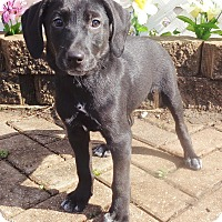 Adopt A Pet :: Marlow - West Chicago, IL