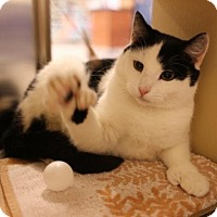 Adopt A Pet :: Manny - Salem, MA