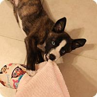 Adopt A Pet :: Kandi - Weeki Wachee, FL