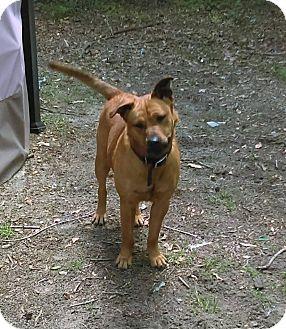 German Shepherd Dog Dog for adoption in Macon, Georgia - Heidi