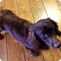 Adopt A Pet :: Barnaby - Erwin, TN