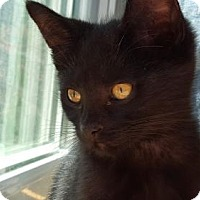 Adopt A Pet :: Oso - Denver, CO