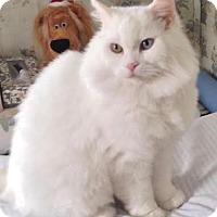 Adopt A Pet :: Bebe - Maryville, TN