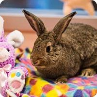 Adopt A Pet :: *DIXIE - Sacramento, CA
