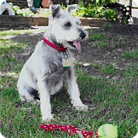 Adopt A Pet :: Maxwell - Sharonville, OH