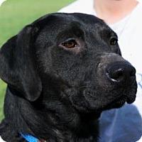Adopt A Pet :: April - LaHarpe, KS