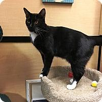 Adopt A Pet :: Roxanne - Riverside, CA