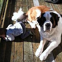 Adopt A Pet :: Denali - Seattle, WA