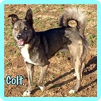 Adopt A Pet :: Colt - Jasper, IN