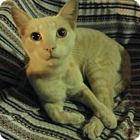 Adopt A Pet :: Tigre - Los Angeles, CA