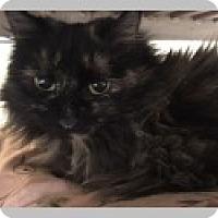 Adopt A Pet :: Bridget - Pittsboro, NC