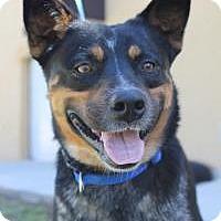 Adopt A Pet :: Oscar - New Smyrna Beach, FL