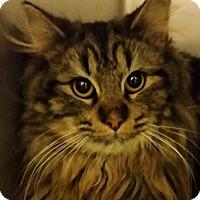 Adopt A Pet :: DUDE - Hopkinsville, KY
