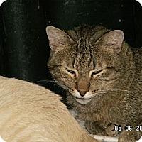 Adopt A Pet :: Donald - Ridgecrest, CA