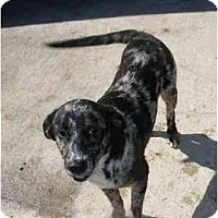 Adopt A Pet :: Shaggy - Alexandria, VA