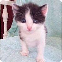 Adopt A Pet :: Oscar--adopted!! - New Richmond, OH