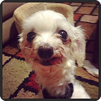 Adopt A Pet :: Leia - Knoxville, TN