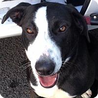 Adopt A Pet :: Shelby - Canoga Park, CA