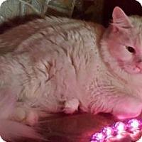 Adopt A Pet :: Isa - Ennis, TX