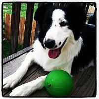 Adopt A Pet :: Echo - Glenrock, WY