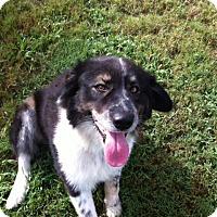 Adopt A Pet :: Tobster - Huntsville, AL
