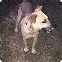 Adopt A Pet :: Rocco - Kingston, TN
