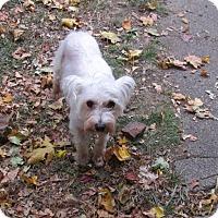 Adopt A Pet :: Suzie - Middletown, RI