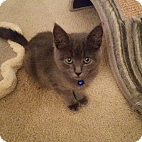 Adopt A Pet :: Frankie - Turnersville, NJ