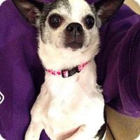 Adopt A Pet :: Chloe - Arden, NC