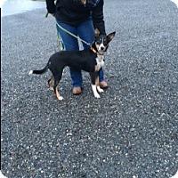 Adopt A Pet :: Maggie - Bellingham, WA