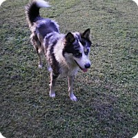 Adopt A Pet :: Sophie - Hewitt, NJ