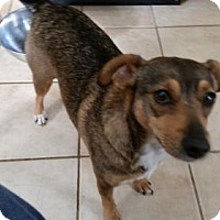 Adopt A Pet :: Precious - Wilmington, DE