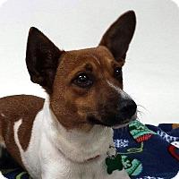 Adopt A Pet :: Penny - San Francisco, CA